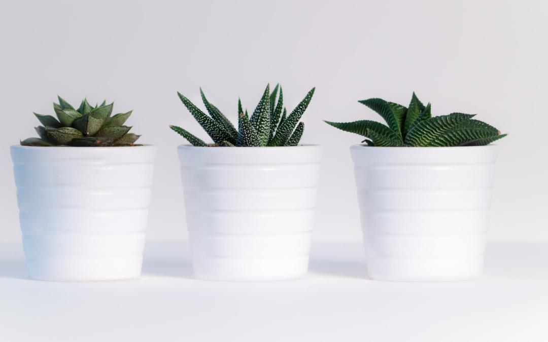 Planten in een potjes